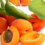 abricot 0