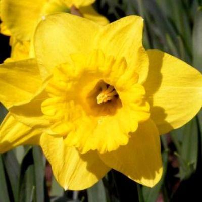 perfumes hechos con Narciso
